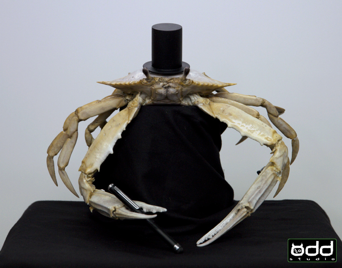 Bingle Crab: Commercial. Odd Studio produced this hybrid crab puppet. a mix of Ghost/Blueswimmer crab. Rod and marionette puppet.